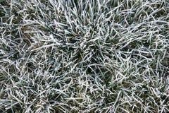 Hierba congelada Fotografía de archivo