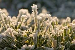 Hierba congelada Fotos de archivo libres de regalías