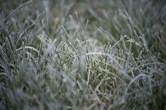 Hierba congelada Fotos de archivo