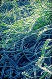 Hierba congelada Imagenes de archivo