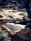 Hierba congelada de la piscina y de la escarcha en la montaña Árboles congelados de la hierba y del bramido de los cantos rodados Fotografía de archivo