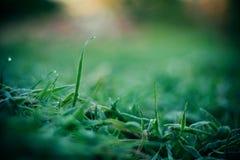 Hierba congelada del contraste del otoño en escarcha Fotos de archivo libres de regalías