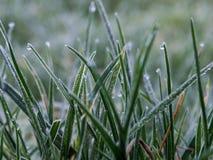 Hierba congelada en último otoño Fotos de archivo libres de regalías