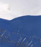 Hierba congelada en nieve Foto de archivo libre de regalías