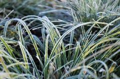 Hierba congelada primer Foto de archivo libre de regalías