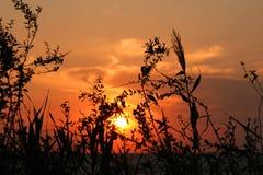 Hierba contra el cielo de la puesta del sol fotografía de archivo libre de regalías