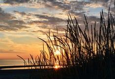 Hierba contra la perspectiva del cielo de la puesta del sol Fotografía de archivo libre de regalías