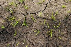 Hierba creciente en la tierra Foto de archivo libre de regalías