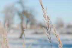 Hierba cubierta con escarcha contra un fondo de un paisaje de la mañana del invierno fotos de archivo libres de regalías