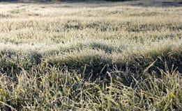 Hierba cubierta con helada Imagen de archivo libre de regalías