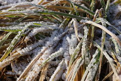 Hierba cubierta con helada Foto de archivo libre de regalías
