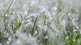 Hierba cubierta con los cristales de hielo, día soleado brillante almacen de video