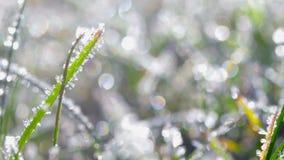 Hierba cubierta con los cristales de hielo, día soleado brillante metrajes
