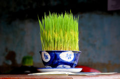 Hierba de arroz fotografía de archivo