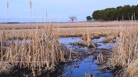 Hierba de Brown cubierta con agua almacen de metraje de vídeo