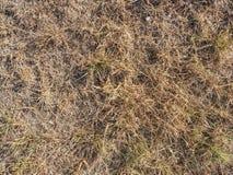 Hierba de Brown secada dentro de sequedad extrema Tallos de la hierba secada i fotos de archivo