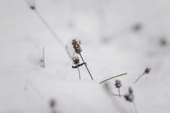 Hierba de debajo nieve Imagen de archivo libre de regalías