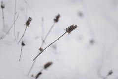 Hierba de debajo nieve Fotos de archivo