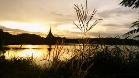 hierba de finger por el lago Foto de archivo libre de regalías