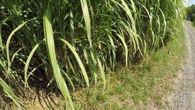 Hierba de interruptor en verano con las plantas frescas jovenes almacen de video