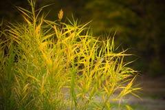 Hierba de lámina del otoño fotografía de archivo