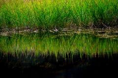 hierba de lámina reflejada en agua no contaminada inmóvil foto de archivo