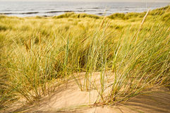 Hierba de la arenaria imagen de archivo