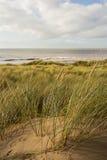 Hierba de la arenaria Fotos de archivo