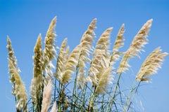 Hierba de la duna Imagen de archivo