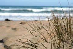 Hierba de la duna Foto de archivo libre de regalías