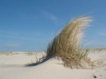 Hierba de la duna Imagen de archivo libre de regalías