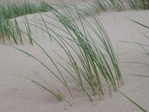 Hierba de la duna fotos de archivo libres de regalías