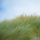 Hierba de la duna Fotografía de archivo libre de regalías