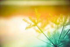 Hierba de la flor Imagen de archivo libre de regalías