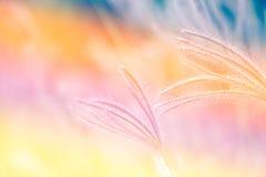 Hierba de la flor Imagenes de archivo