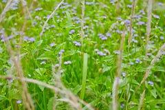 Hierba de la flor Foto de archivo