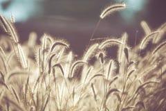 Hierba de la flor archivada con tono retro del color Fotos de archivo libres de regalías