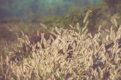Hierba de la flor archivada con tono retro del color Fotografía de archivo