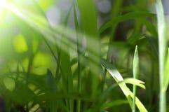 Hierba de la frescura en naturaleza fotografía de archivo