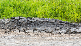 Hierba de la grieta de la rotura del asfalto Imagen de archivo