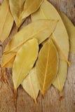 Hierba de la hoja de laurel Imagen de archivo libre de regalías