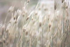 Hierba de la naturaleza Fotos de archivo