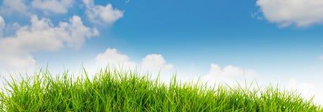Hierba de la naturaleza de la primavera y cielo azul en la parte posterior Su Fotos de archivo