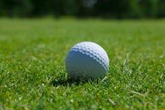 Hierba de la pelota de golf Foto de archivo libre de regalías
