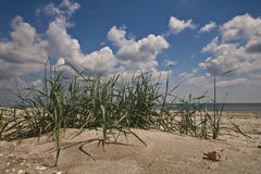 Hierba de la playa Imágenes de archivo libres de regalías