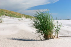 Hierba de la playa Imagen de archivo