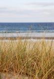 Hierba de la playa el mar Fotos de archivo libres de regalías