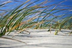 Hierba de la playa en el viento Foto de archivo libre de regalías
