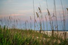Hierba de la playa a lo largo de la carretera 30A Imagen de archivo libre de regalías