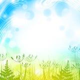 Hierba de la primavera Imagenes de archivo